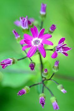 ~~little wild flowers by hkfioregiallo~~