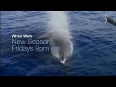 watch whale wars online for free full episodes