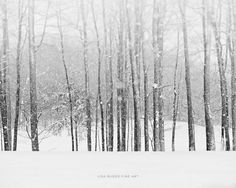 Snow Print or Canvas Art Snowy Forest Landscape Woods Tree