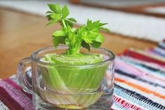 Vegetables you can regrow again and again Celery Cut off the base of the celery and place it in a saucer or shallow bowl of warm water in the sun. Leaves will begin to thicken and grow in the middle of the base, then transfer the celery to soil. Regrow Celery, Regrow Vegetables, Fruits And Vegetables, Celery Plant, Culture Champignon, Potager Bio, Growing Veggies, Container Gardening, Gardening Tips