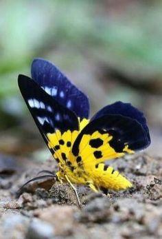 36Butterflies And Moths
