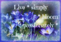 Bloom passionately