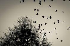 https://flic.kr/p/qP5uxZ | Hear the black birds cry | Inspiriert von Amon Amarth - Cry Of The Black Birds  www.youtube.com/watch?v=4vMHVOI32r4