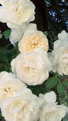 Organic Roses, Grow Organic, Organic Farming, Lavender Roses, Yellow Roses, White Roses, Fresh Flowers Online, Natural Pesticides, Preserved Roses