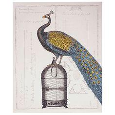 Arthouse Blue Peackock Canvas 80x100 - Prints & Wall Hangings - Homewares