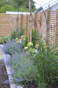 Tall grass on the back, Nepeta (also known as catnip / blue flowers . - Garden DIY - Tall grass on the back, Nepeta (also known as catnip / blue flowers … – - Fence Landscaping, Backyard Fences, Fence Garden, Garden Grass, Balcony Gardening, Backyard Privacy, Garden Planters, Inexpensive Landscaping, Modern Landscaping