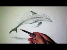 Comment dessiner un dauphin [Tutoriel]