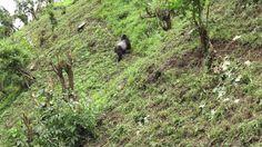 Gorilla Tracking in Uganda Uganda, Private Safari, Amp, Group, Viajes