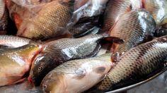 wholesale fish market bangladesh | the manhattan fish market bangladesh ... Universe News, Manhattan, Fish, Pisces