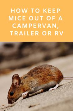 Mice don't have to ruin your camping trip—or your camper. Here are some camper-approved tricks to keep mice out of your home-on-wheels. Mouse Deterant, Camping Gear, Camping Tricks, Popup Camper Remodel, Camper Hacks, Cooking Equipment, Rv Trailers, Camping Supplies, Remodeled Campers