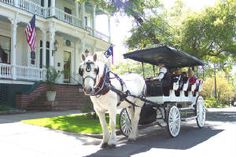 horse drawn carriage rides Wilmington, NC