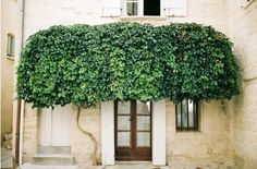 a tree awning - oh my!