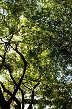 #trees #green