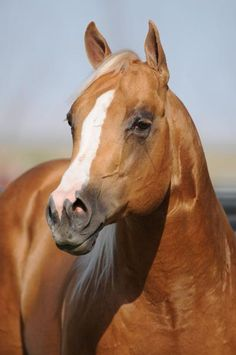 1000 Images About Horses For Everyday On Pinterest