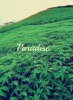 ♡Paradise♡
