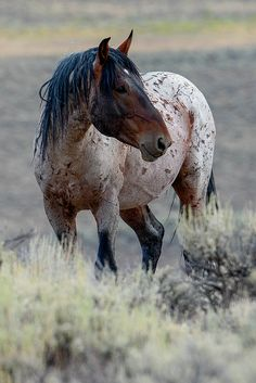 "scarlettjane22: "" Wild Horses at Green River Wyoming. by Carla Farris on flickr"""