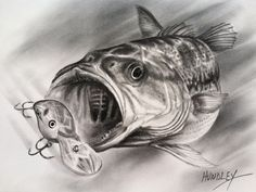 Supreme Portrait Drawing with Charcoal Ideas. Prodigious Portrait Drawing with Charcoal Ideas. Bass Fishing Pictures, Bass Fishing Tips, Kayak Fishing, Fish Drawings, Pencil Drawings, Art Drawings, Fish Logo, Desenho Tattoo, Drawing Techniques