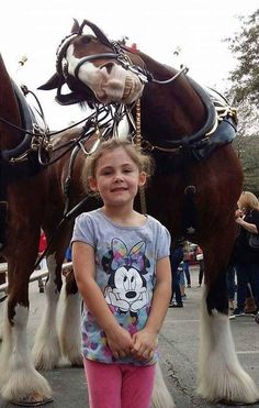 What a poser, cute little girl and a great big photo-bomber Clydesdale behind her with a grin on his face!