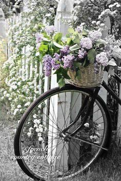 Such beautiful flowers.and the bicycle with wicker basket and flowers is just so 'country' and romantic.