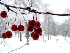 Ice Berries by ~britt1913 on deviantART