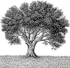 """The novel advances in time and Bailey is sitting in his tree as a young man: """"… Bailey is so shocked by the sight of the black-and-white striped tents in the field that he nearly falls out of the tree"""" (Morgenstern 116). It had been years since he interacted with the Night Circus and now is old enough to go on his own. I hope Bailey realizes his aspirations to join the Circus of Dreams."""