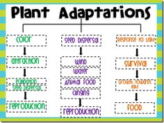Here's a nice form for students on plant adaptations. Blank form and answer key included.