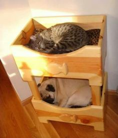 Pet Bunk Bed i like! Animals And Pets, Funny Animals, Cute Animals, Pet Beds, Dog Bed, Bunk Beds, Crazy Cat Lady, Crazy Cats, Pug Love