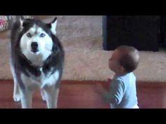 Husky talks with baby