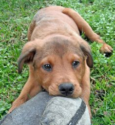 Huck the Mixed Breed, playin' around!!!!