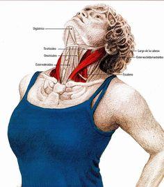 Canınızı acıtan boyun ağrısından kurtaran 5 egzersiz! - Yoga Routine For Beginners, Diet And Nutrition, Athletic Tank Tops, Health Fitness, Exercise, Workout, Face, Model, Health Tips