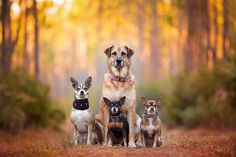 I love dogs. I love photography. So I became a professional dog photographer…