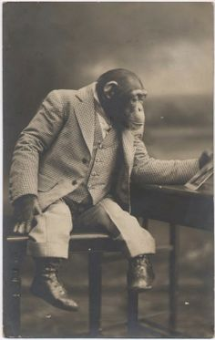 Dressed Chimpanzee Looking at Photograph, c. 1908