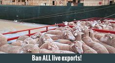 Please sign Ban Live Shipments - Man and his government are the most wicked of all. Responsive image