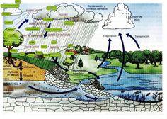 El ecosistema como el conjunto de seres vivos que viven e interactuan  en un ambiente determinado (bosque, charca,..) y las caracteristicas del ambiente donde viven.