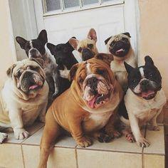 nice doggie family
