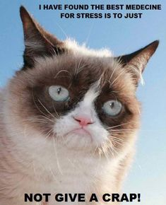 Grumpy Cat. Best medicine for stress.