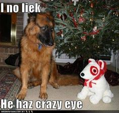 cute pictures of animals with captions - Google Search