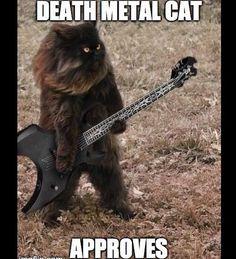 death metal meme - looks like my cat Momo - BMW Funny Animal Memes, Cat Memes, Funny Cats, Funny Animals, Cute Animals, Funny Humor, Death Metal, Cute Cats, I Love Cats