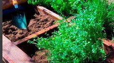 DIY: Unik urtekasse på 1-2-3 Plants, Diy, Bricolage, Do It Yourself, Plant, Homemade, Diys, Planets, Crafting