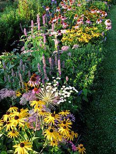 yellow black-eyed susans, lavender sedum, white tanacetum, lavender anise hyssop, and purple coneflowers