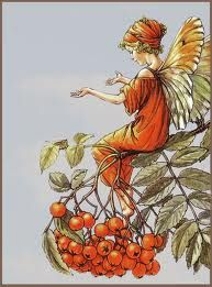 The Song Of The Mountain Ash Fairy, an autumn Flower Fairy poem by Cicely Mary Barker Cicely Mary Barker, Tree Illustration, Fantasy Illustration, Illustrator, Kobold, Fairy Pictures, Vintage Fairies, Flower Fairies, Fairy Art