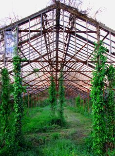 Old Abandoned Greenhouse In New Jersey | Love's Photo Album