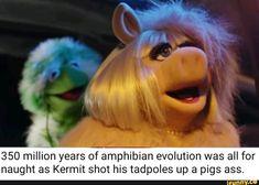 350 million years of amphibianrevrolution was all for naught as Kermit shot his tadpoles up a pigs ass. Sesame Street Memes, Sesame Street Muppets, Dark Jokes, Dark Humour Memes, Elmo Memes, Dankest Memes, Really Funny Memes, Stupid Funny Memes, Hilarious