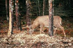 Hunting Guide, Firearms, Animals, Animales, Animaux, Weapons, Animal, Revolvers, Animais