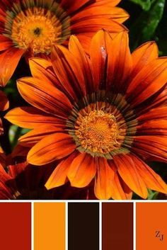 Kitchen colors schemes warm 61 ideas for 2019 Color Schemes Colour Palettes, Fall Color Palette, Colour Pallette, Color Palate, Color Combos, Orange Color Schemes, Orange Color Palettes, Decoration Palette, Color Harmony