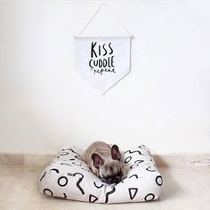 how cute is @littleenzo_the_frenchie  on one of our floor cushions?? #frenchie #doglove #regram
