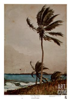 Palm Tree, Nassau, 1898 Tropical Coastal Seascape Painting Print Wall Art By Winslow Homer Winslow Homer Paintings, Tree Art, American Artists, Palm Trees, Art Museum, Watercolor Art, Art Photography, Art Gallery, Illustration Art