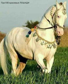 Pretty Horses, Horse Love, Beautiful Horses, Animals Beautiful, Animals And Pets, Cute Animals, Horse Clipping, Akhal Teke Horses, Types Of Horses
