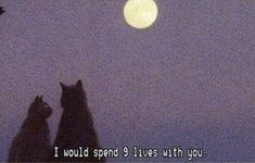 Art Aesthetic Pretty Pink Purple Sadboi SadEdit SadAnime Beautiful RetroArt Filter Artwork Quote Cats Moon Stars NightTime LateNight Kitten Kitty Meow Night Romantic Date View Love Cute Wholesome Mood Quotes, Life Quotes, Cat Quotes, Daily Quotes, Numb Quotes, Indie Quotes, Edgy Quotes, Love You, Just For You