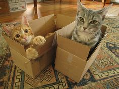 """""""the kittens learned the value of a perfectly-sized box..."""""""